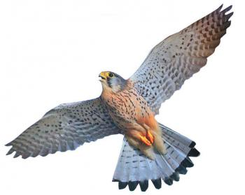 Отпугиватель птиц ХИЩНИК-3